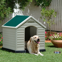 Keter Dog Kennel Review