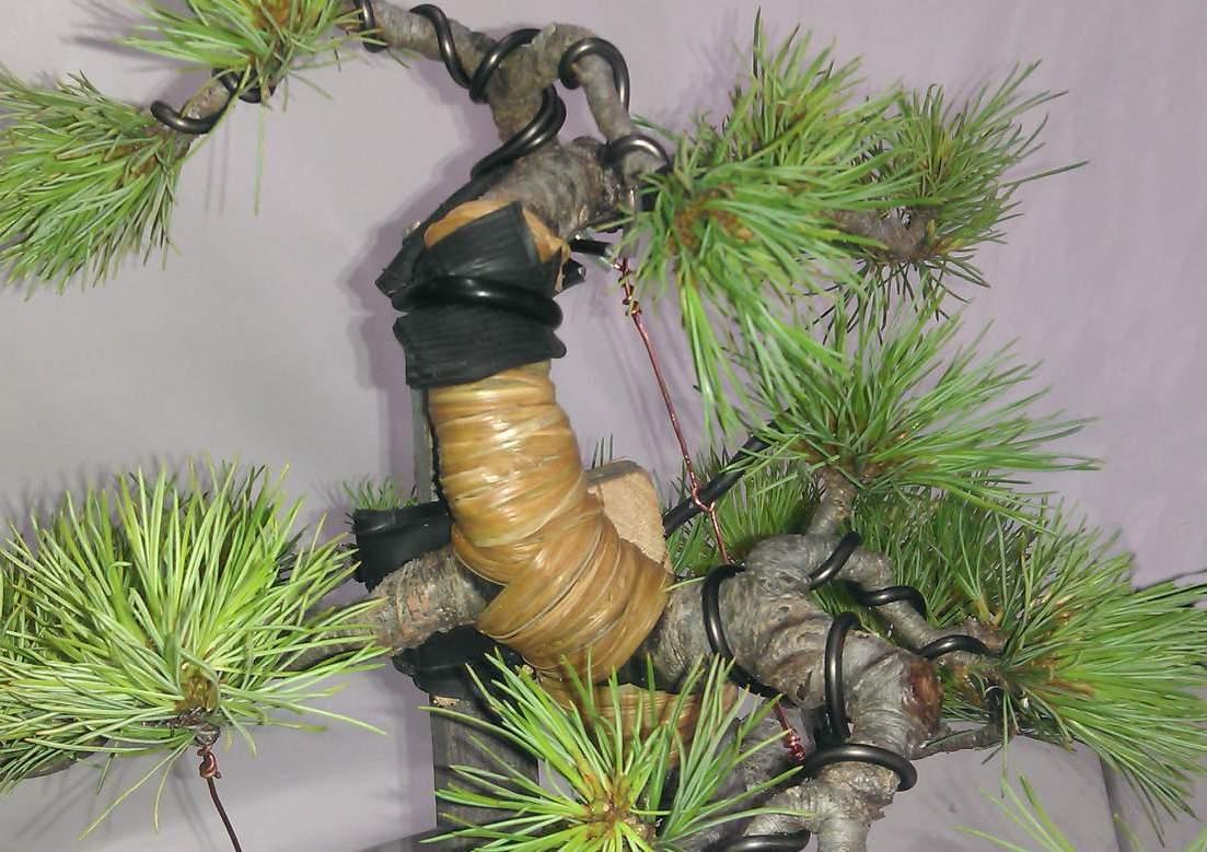 bonsai_wiring_blog