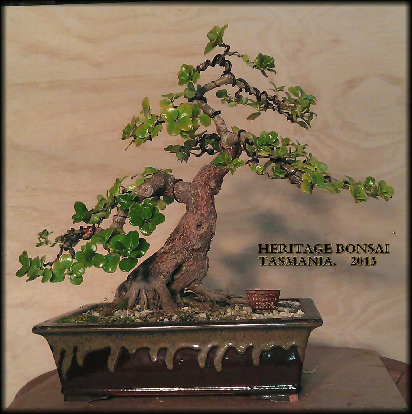 bonsai-heritage-root