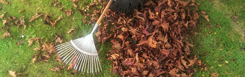 leaf-compost