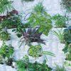 PlantScape STONE